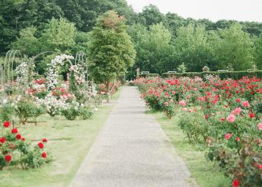 byebyegrass - diensten tuin ontwerp